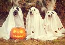 IT`s ABOUT HALLOWEEN